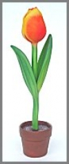 Tulpe,Whole 43x43x206cm