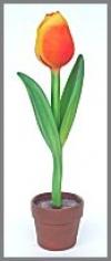 Tulpe,kl. 22x22x96cm