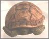 Schildkröten kl.