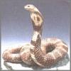 Kobra, braun,12x11cm