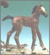 Fohlen,st.N.10x11,5cm