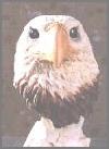 Adler, Büste,16cm