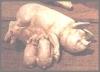 Schwein+Ju.12x4cm