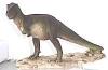 Tyrannosaurus,16x12cm