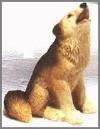 Cojote mini,5cm