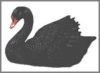 Schwan schwarz,13xcm