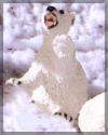 Eisbär klein sitzend,6cm