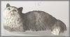 Angora Katze grau,11cm