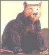 Bär schwarz,11x10cm