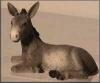 Esel, 16 cm