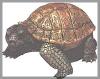 Schildkröte, gr.