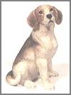 Beagle, sit.10x8cm