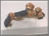 Beagles, CC,10x16cm