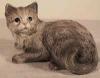 Katze, lieg.G.22x16cm