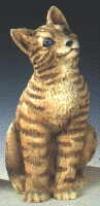 Katze, Pfoten h. braun