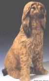 Afghane,60x34cm