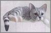 Kanten Katze, schw-weiß