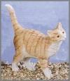 Katze, laufend,13cm